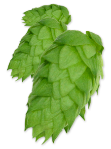 hop chinook