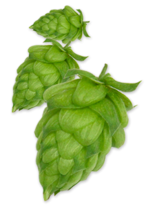 hop willamette