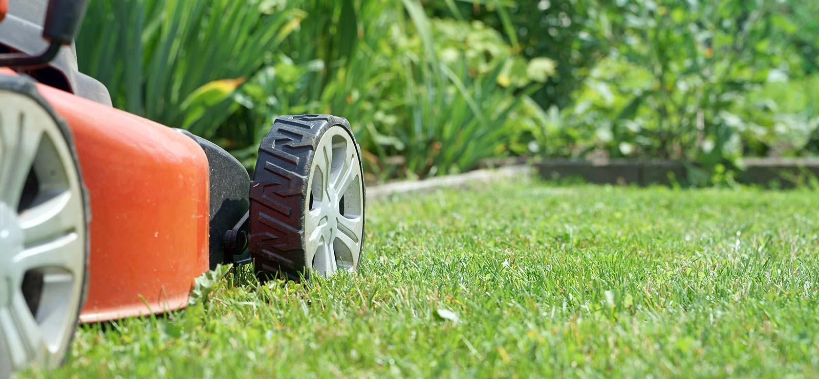 cedar rim nursery lawn care blog