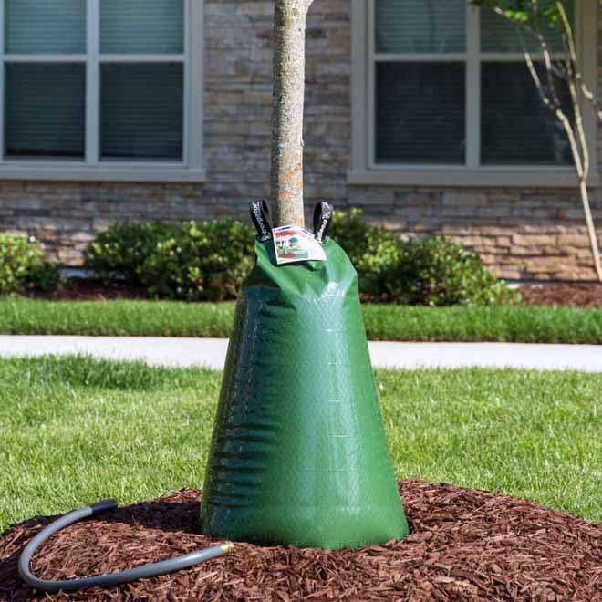 cedar rim nursery tree gator sizes original 20 gallons